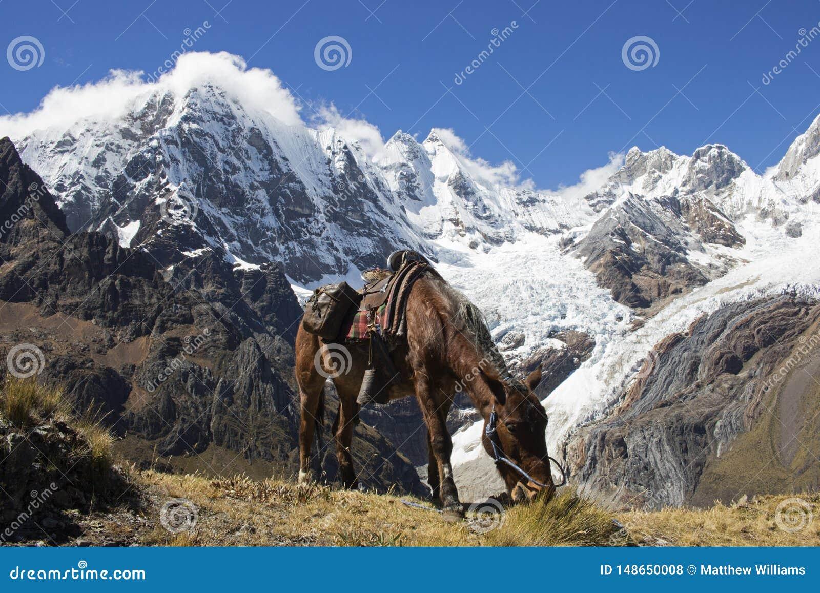 Pause de midi dans les montagnes des Andes
