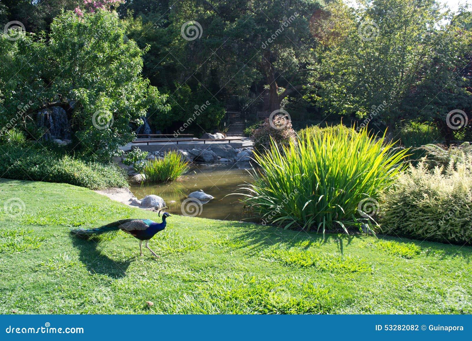 Pav o com lagoa e jardim da paisagem foto de stock for Bassin naturel de jardin