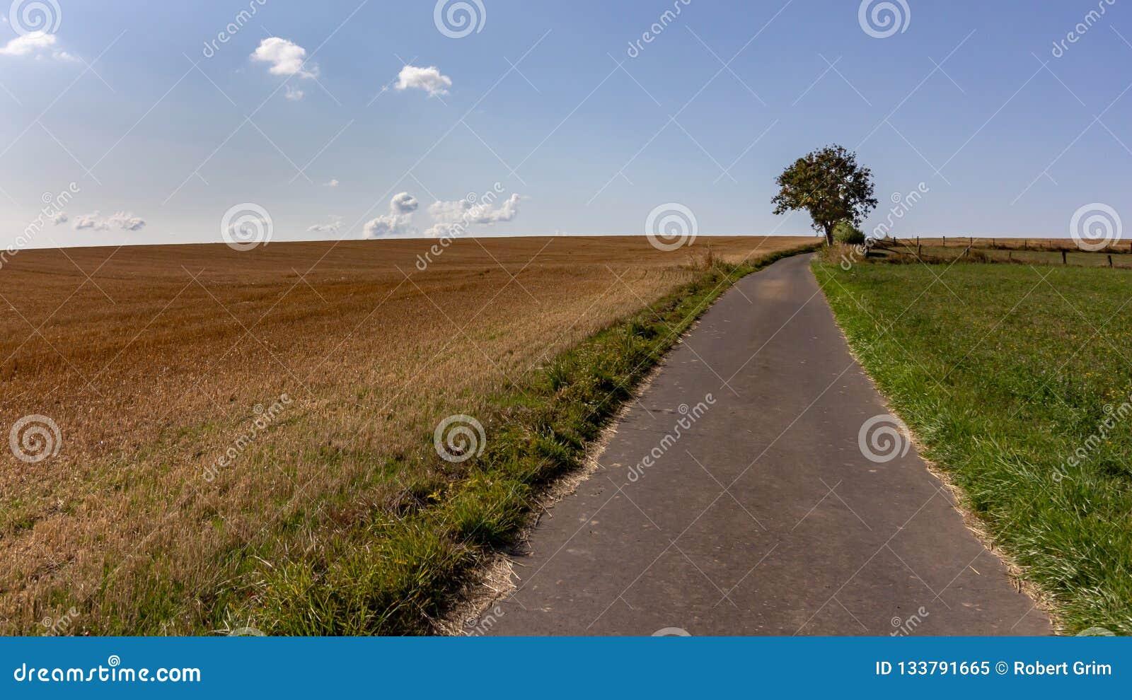Single tree near a public path through farmland in Luxembourg