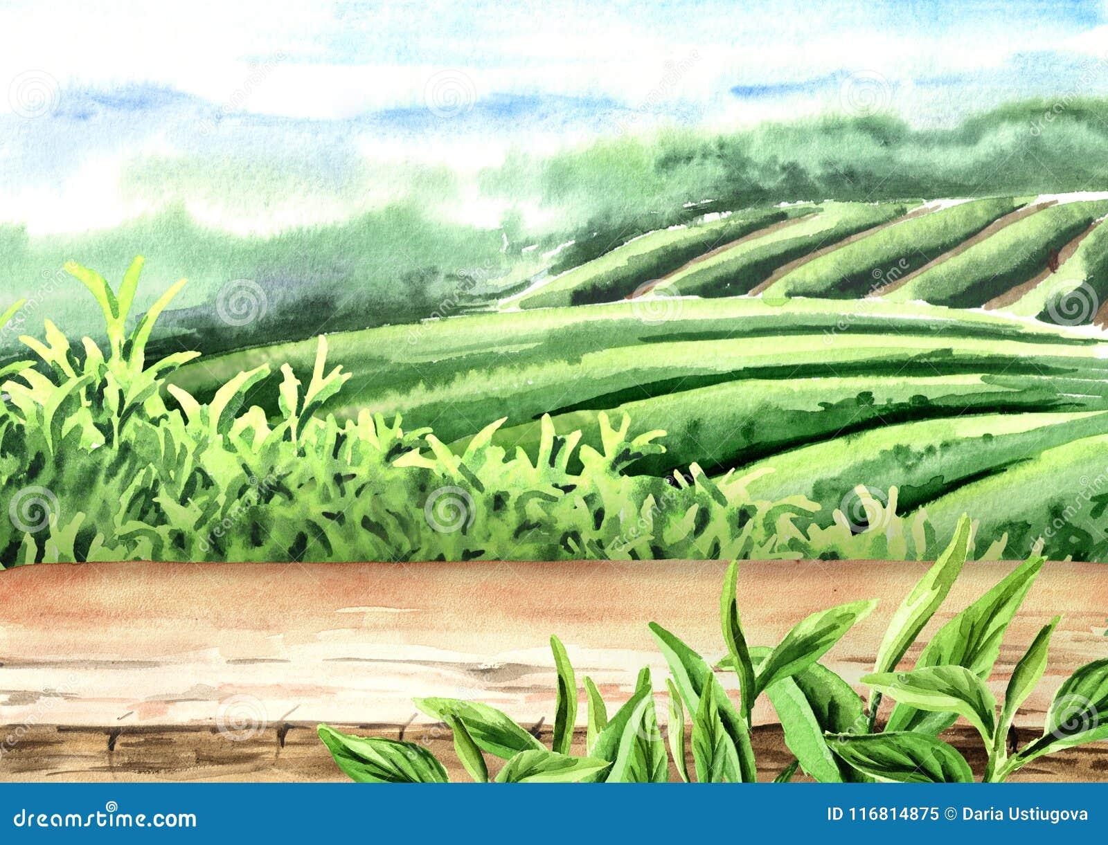Pavimento di legno sulla piantagione di tè Illustrazione disegnata a mano dell acquerello