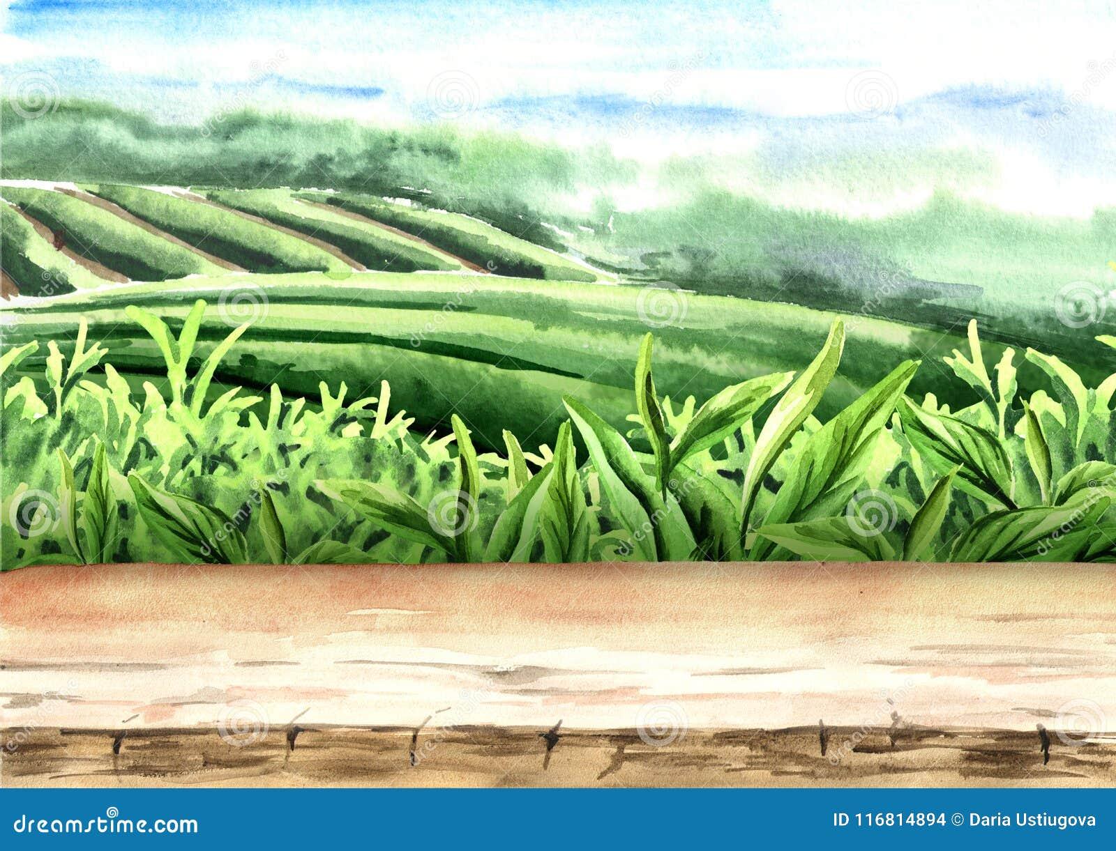 Pavimento di legno sulla piantagione di tè Illustrazione disegnata a mano dell acquerello Fondo del tè