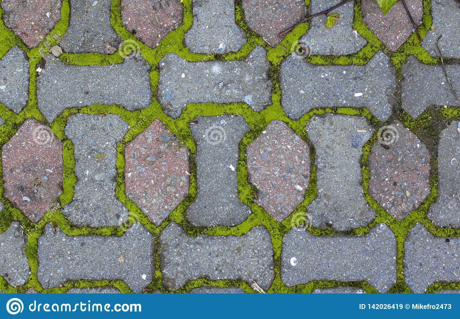 Paving stones and moss between bricks. Texture
