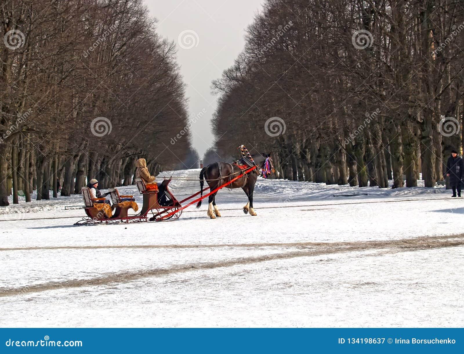 Pavlovsk, Rússia Condução das crianças no pequeno trenó na avenida do parque do inverno