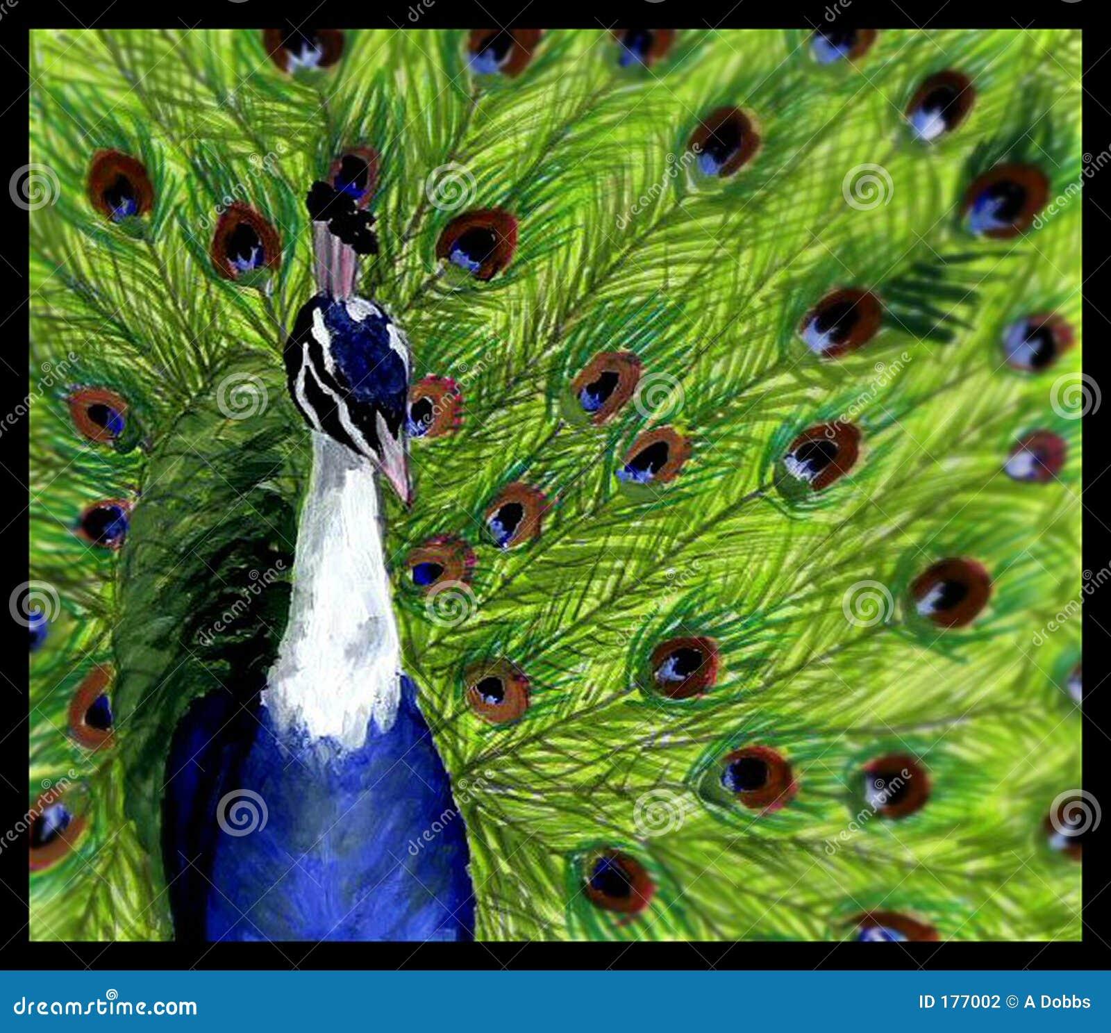 Pavo real stock de ilustraci n imagen de p jaros plumas - Fotos de un pavo real ...