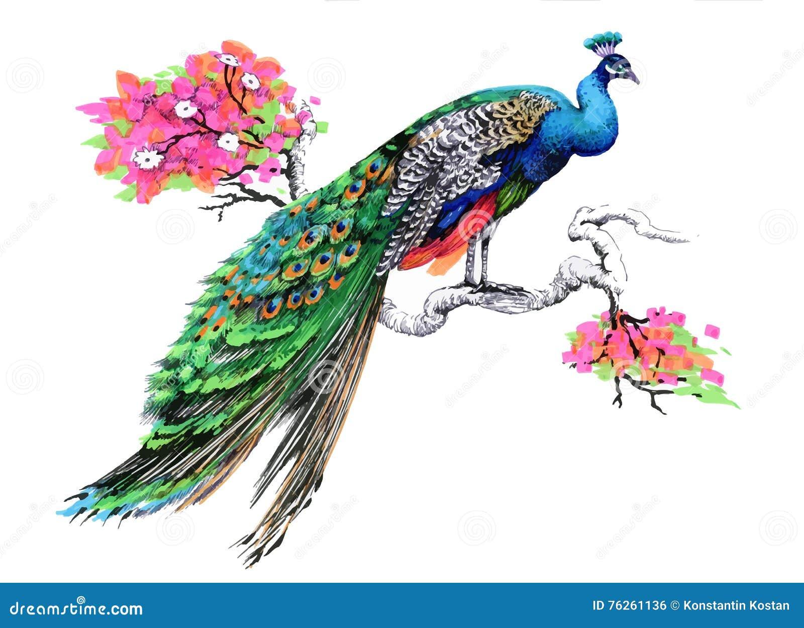 Pavo Real Del Dibujo De La Acuarela En Rama De árbol