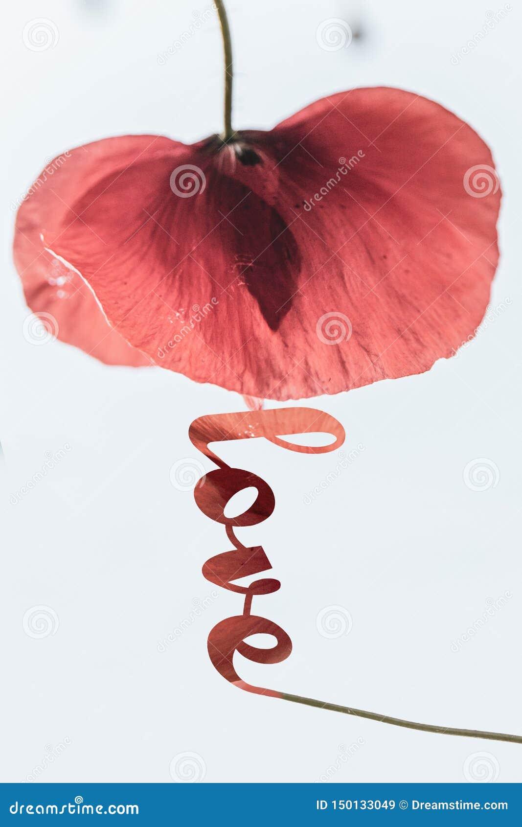 Pavot rouge d amour de typographie inspirée d affiche