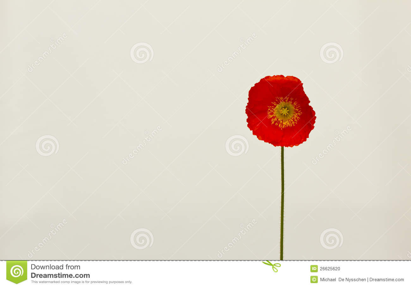 Pavot rouge simple