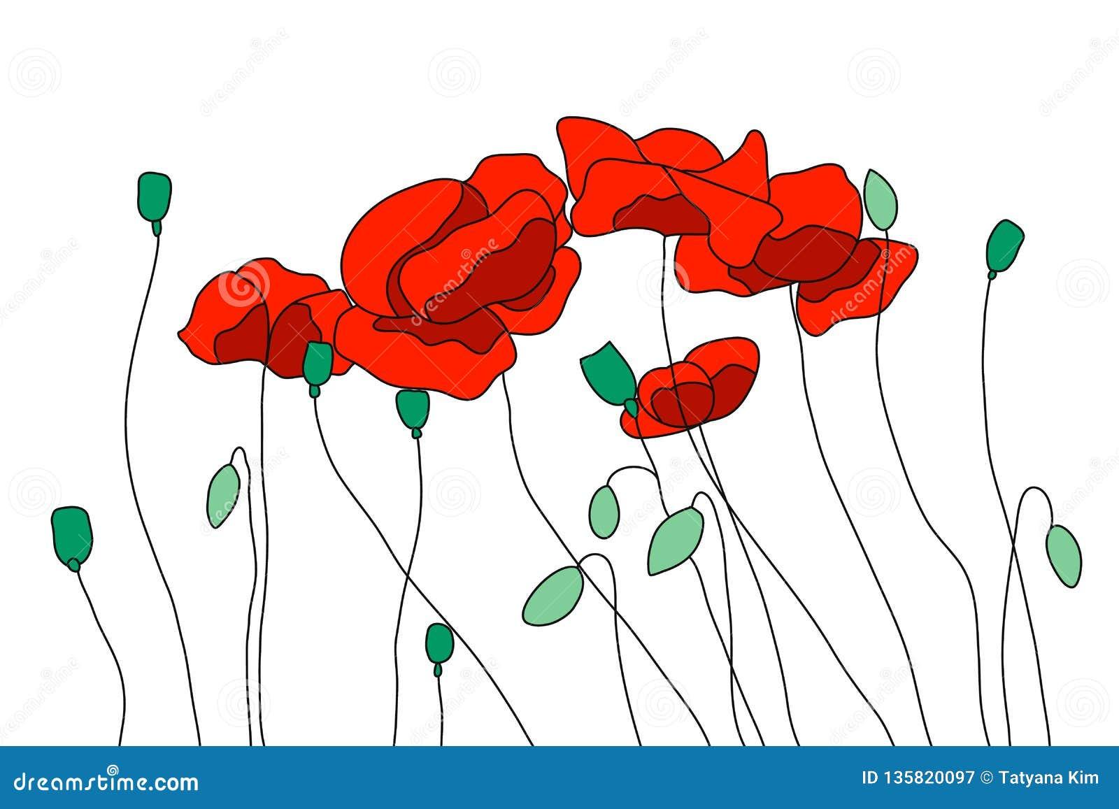 Pavots de champ rouges, pavots fleurissants Bourgeons, tiges et graines