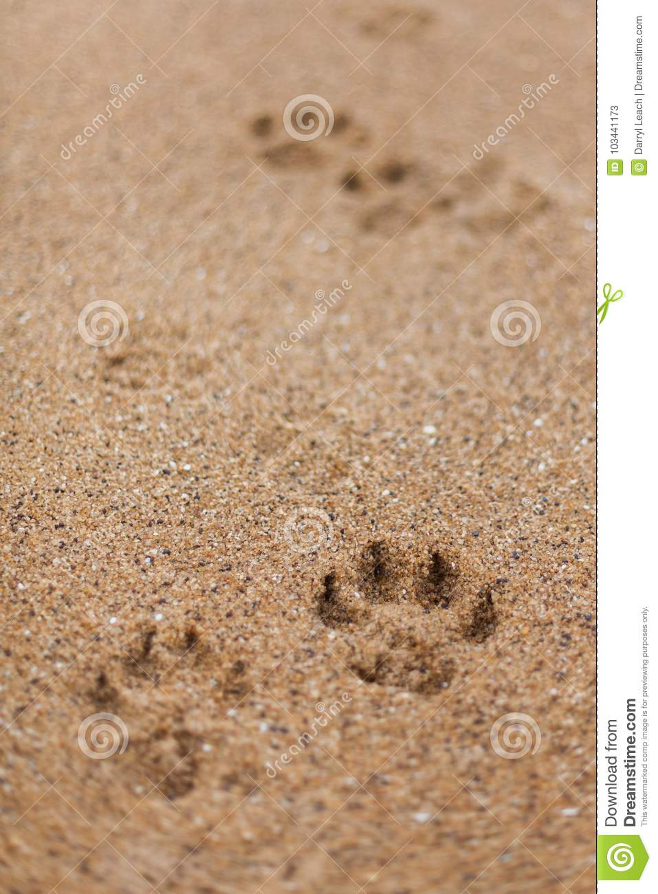 Paw prints in the grainy sand of Bells Beach