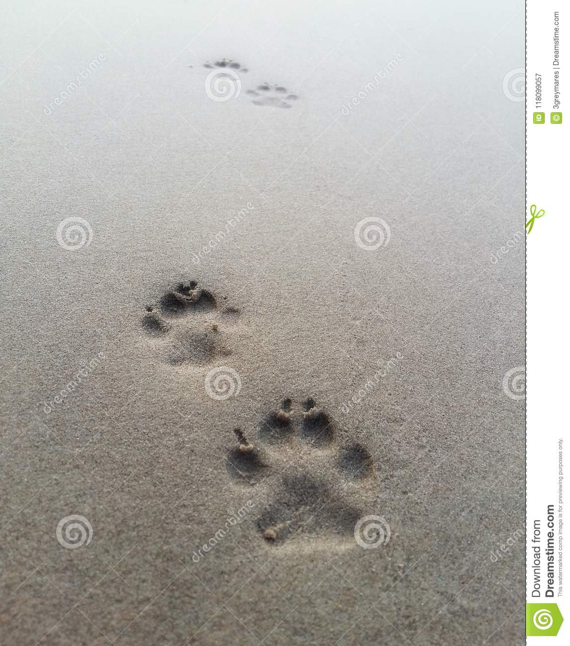 4716b36e1 Paw prints in the sand. stock image. Image of lake