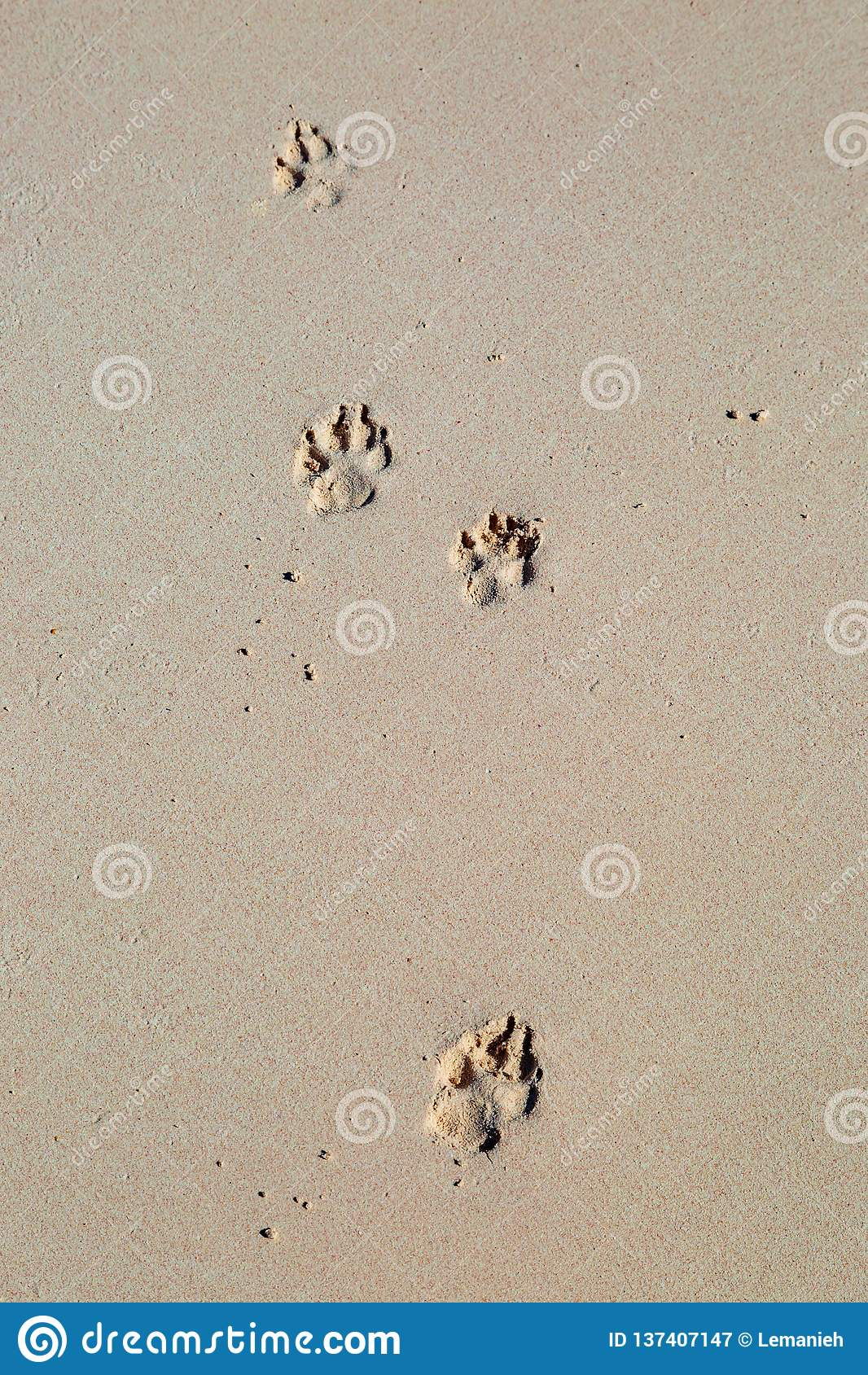 7a2842c98 Paw Prints in the Sand stock image. Image of scenic - 137407147
