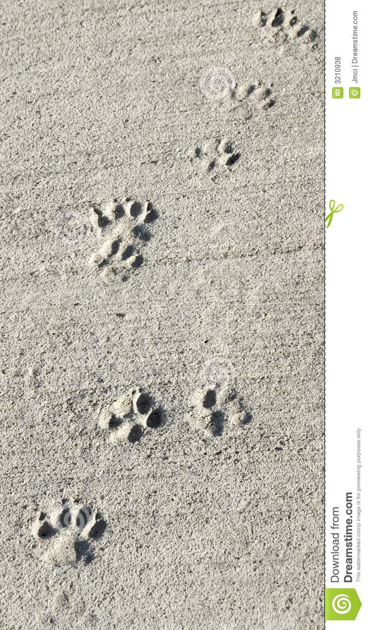 paw prints in wet cement path stock photo image 3210938