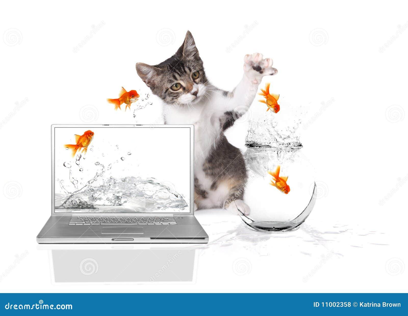 Pawing水的鱼金跳的小猫