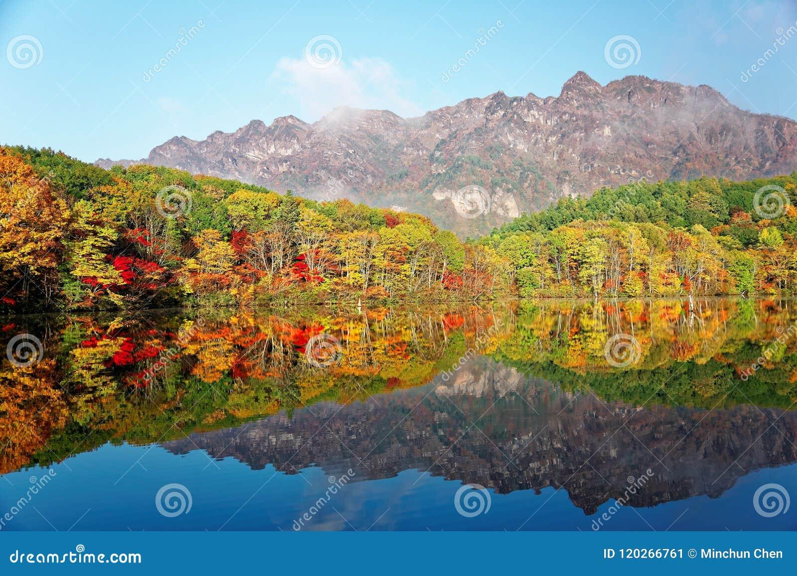 Paysage étonnant de lac d automne de Kagami Ike Mirror Pond dans la lumière de matin avec des réflexions symétriques de feuillage
