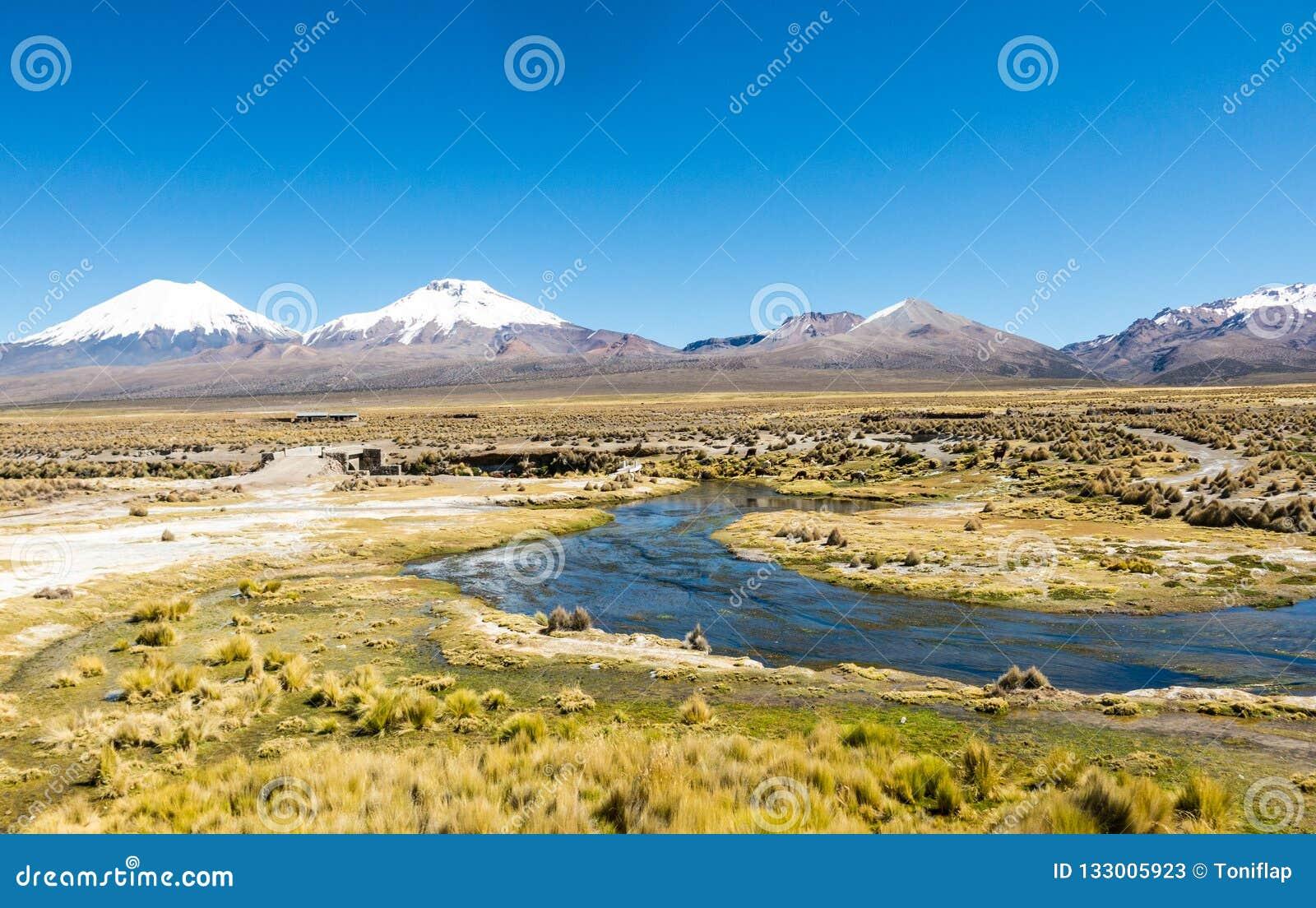 Paysage andin élevé de toundra dans les montagnes des Andes
