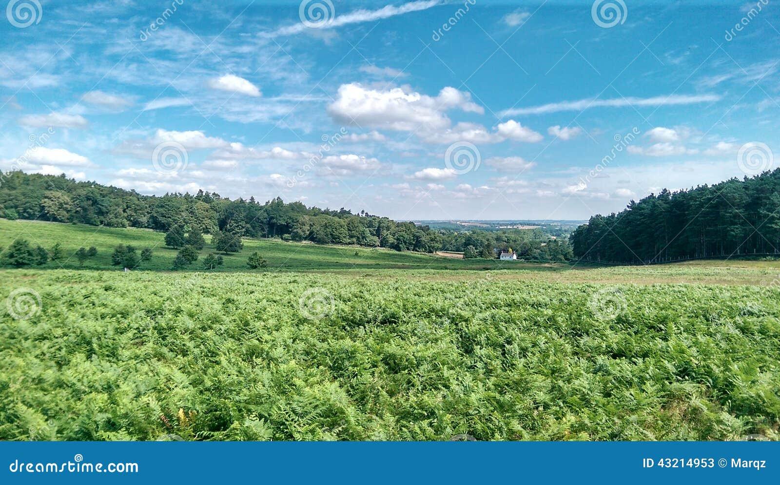 Paysage anglais typique photo stock image 43214953 - Objet typique anglais ...