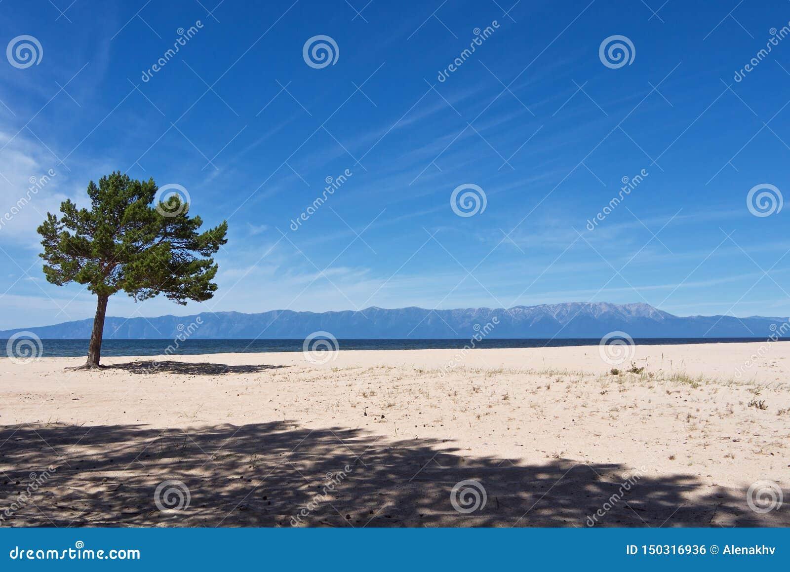 Paysage au bord du lac arénacé blanc avec le pin vert seul