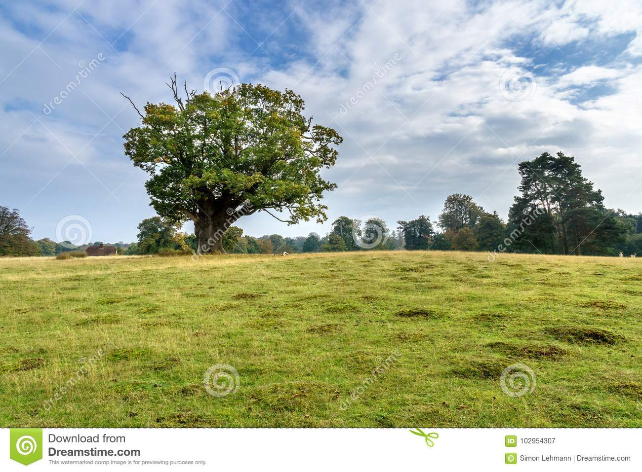 Paysage automnal - Angleterre