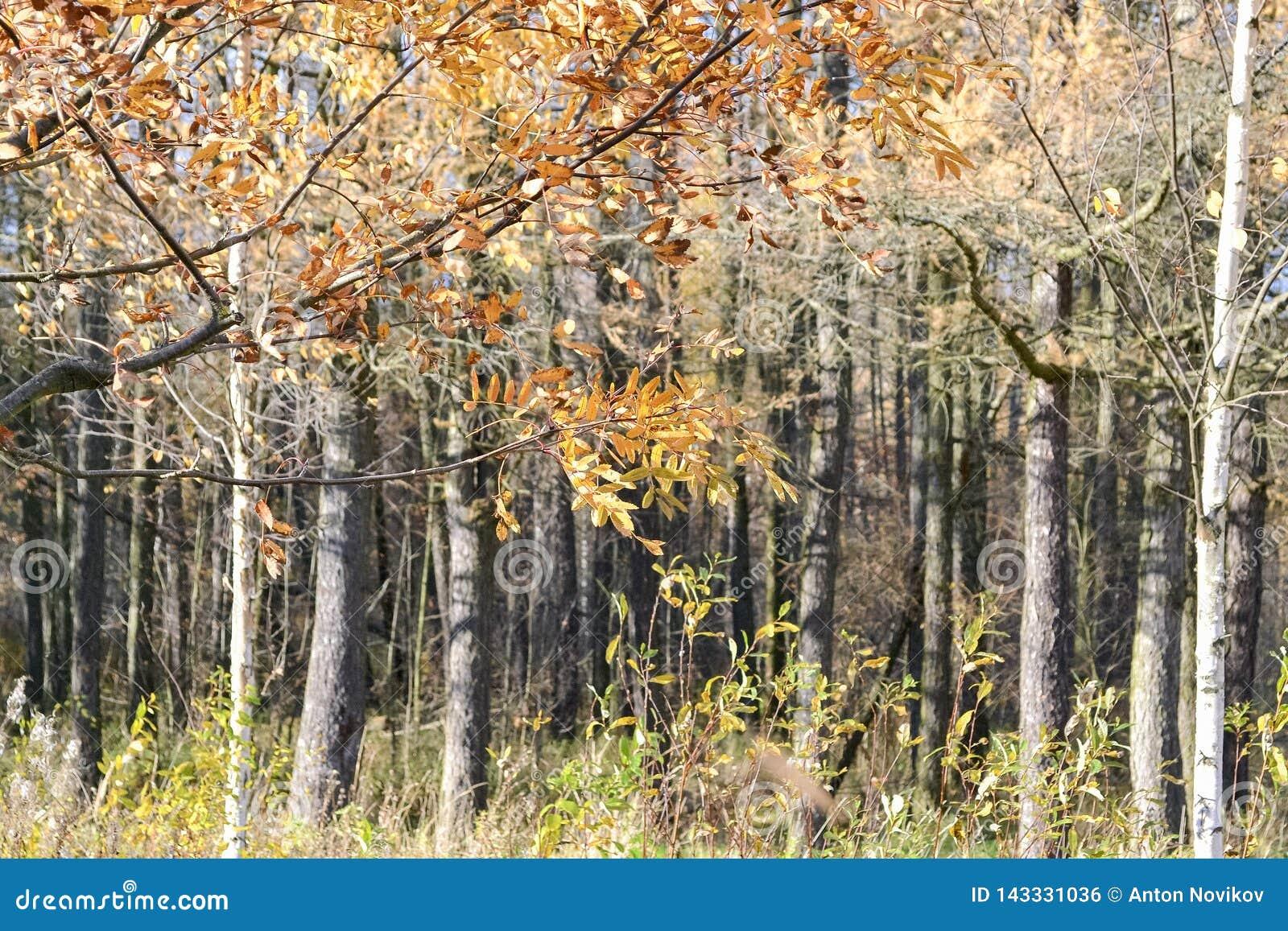 Paysage avec des arbres d automne