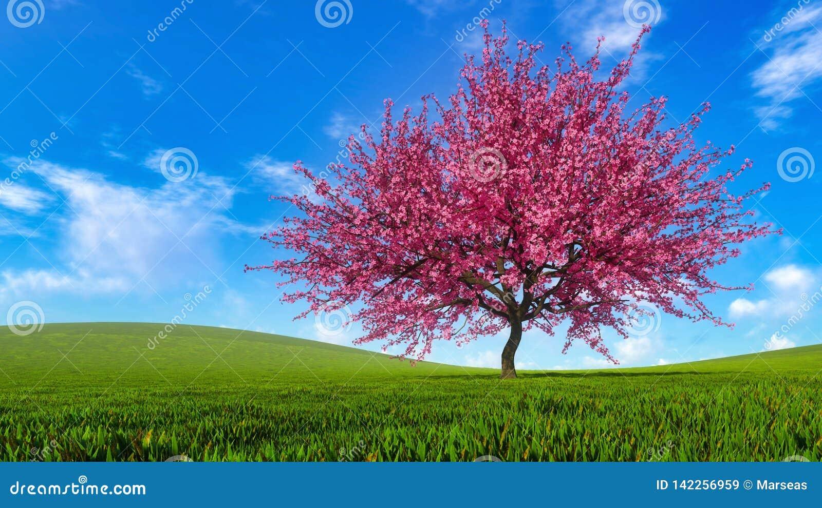 Paysage avec le cerisier de Sakura dans la pleine fleur