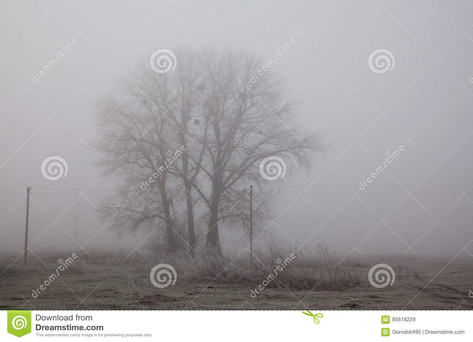 Paysage brumeux de champ d arbre Concept de tristesse et de solitude Matin tôt d hiver, gel au sol effet de film de bruit