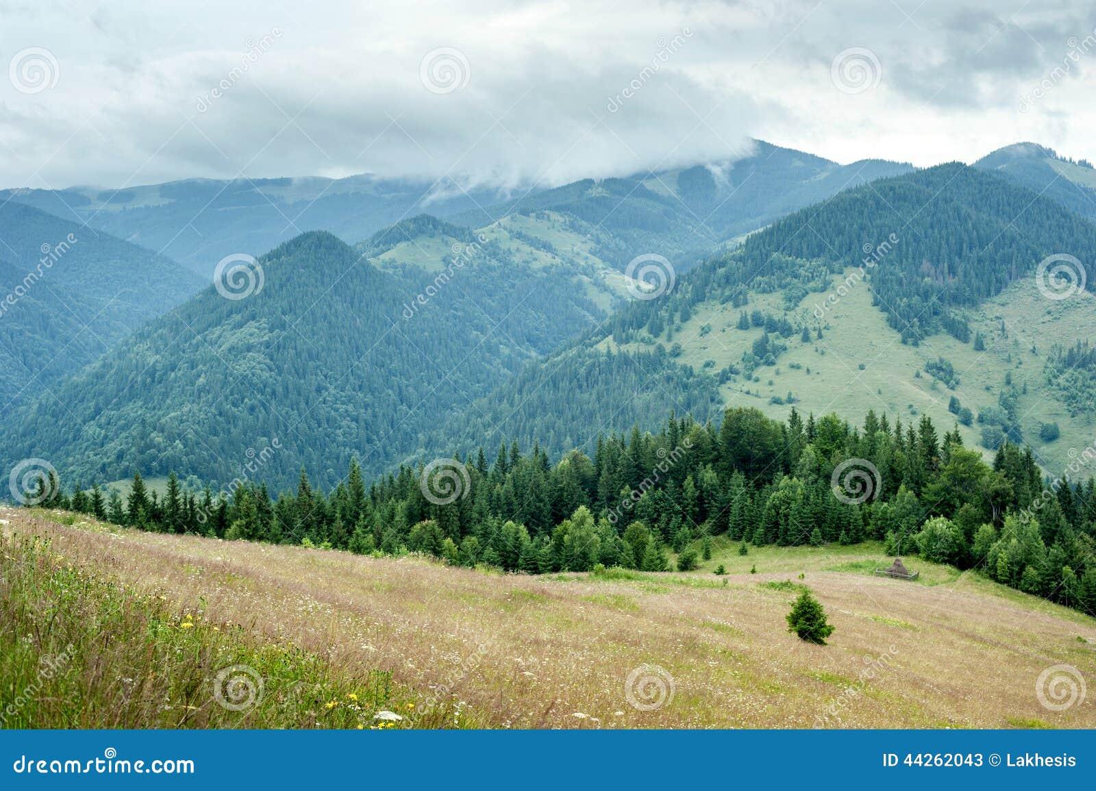 pin paysages montagne fond - photo #31