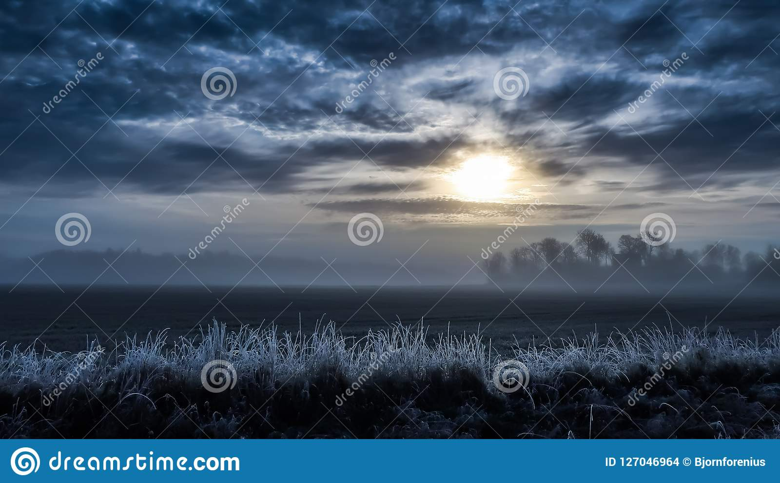 Paysage brumeux froid, champ dans le lever de soleil Herbe givrée