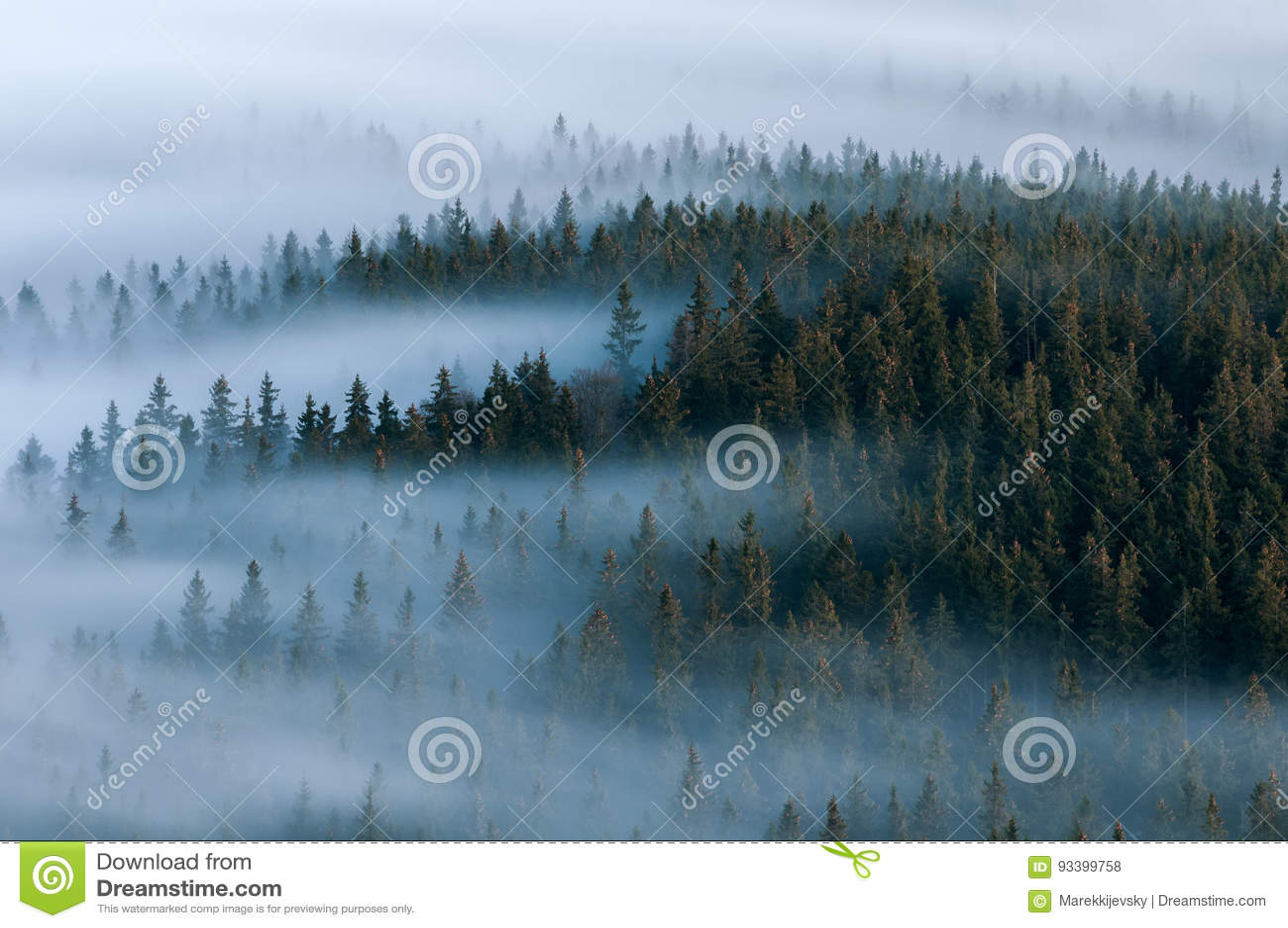 Paysage brumeux Vallée brumeuse de parc national de Sumava Détail de forêt, montagne de Boubin de République Tchèque