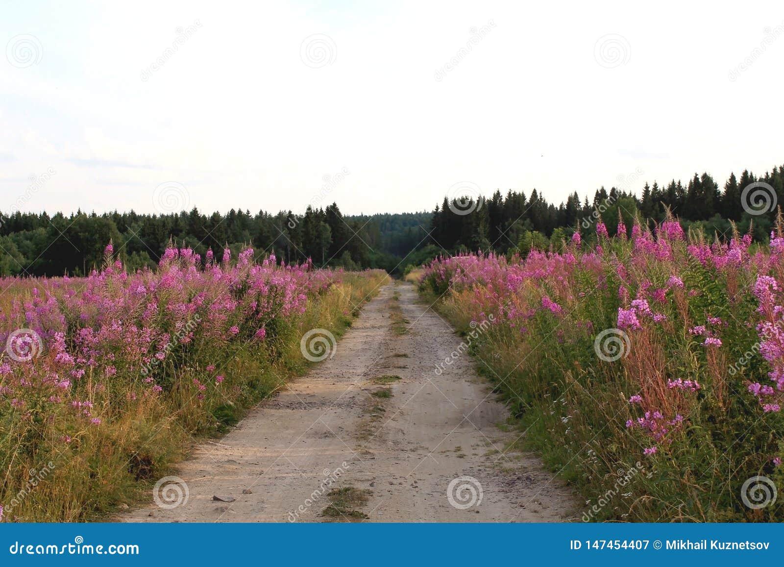 Paysage d été avec un champ des fleurs de floraison de sortie