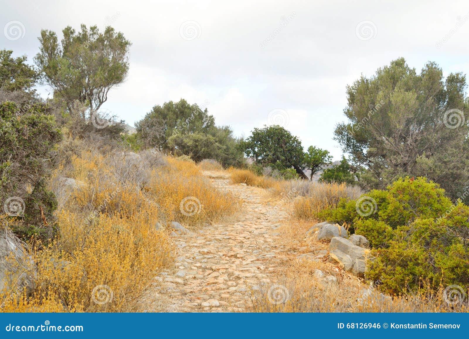 Paysage d été en Crète