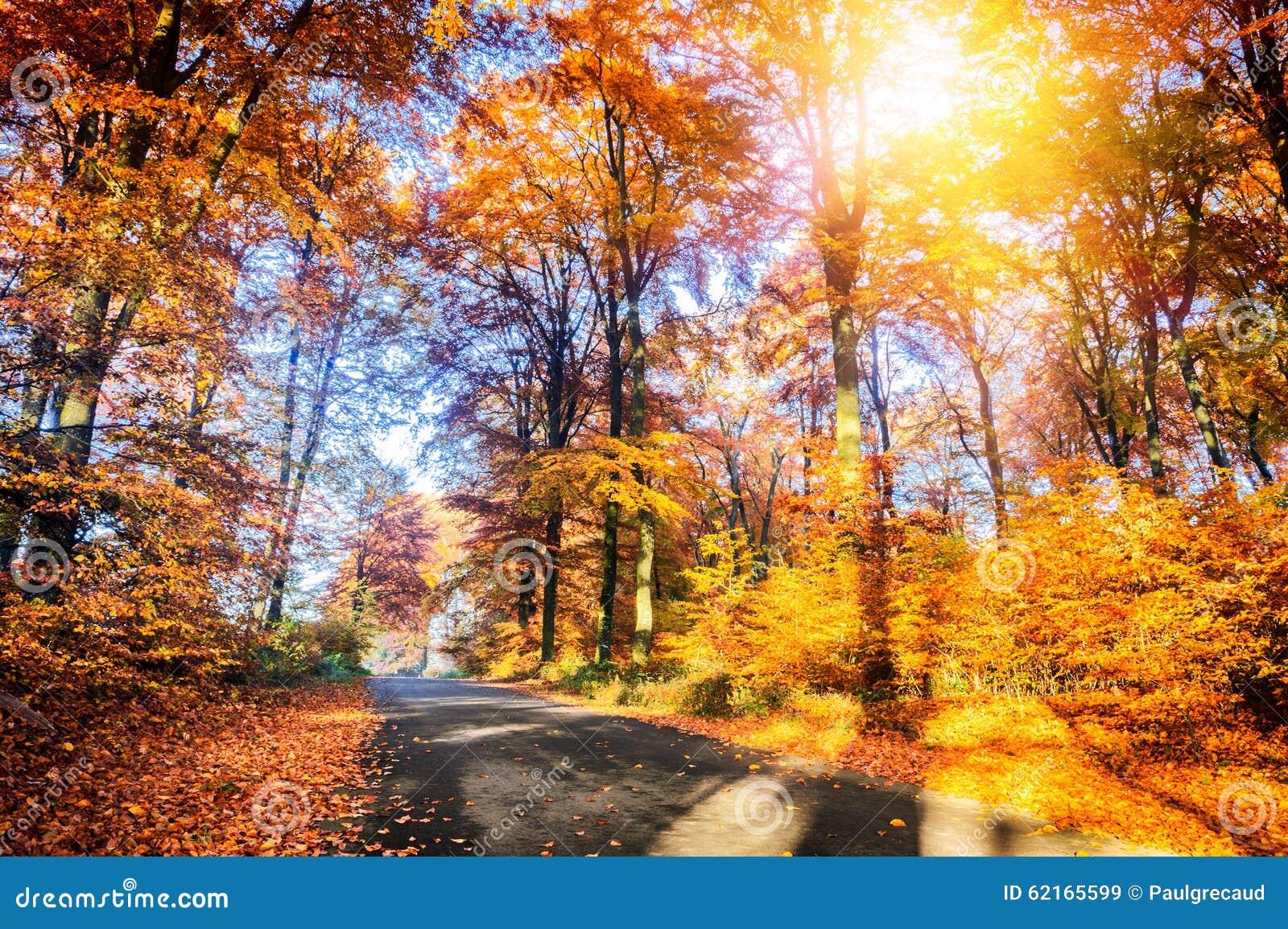 paysage d 39 automne avec la route de campagne image stock image du fond stationnement 62165599. Black Bedroom Furniture Sets. Home Design Ideas