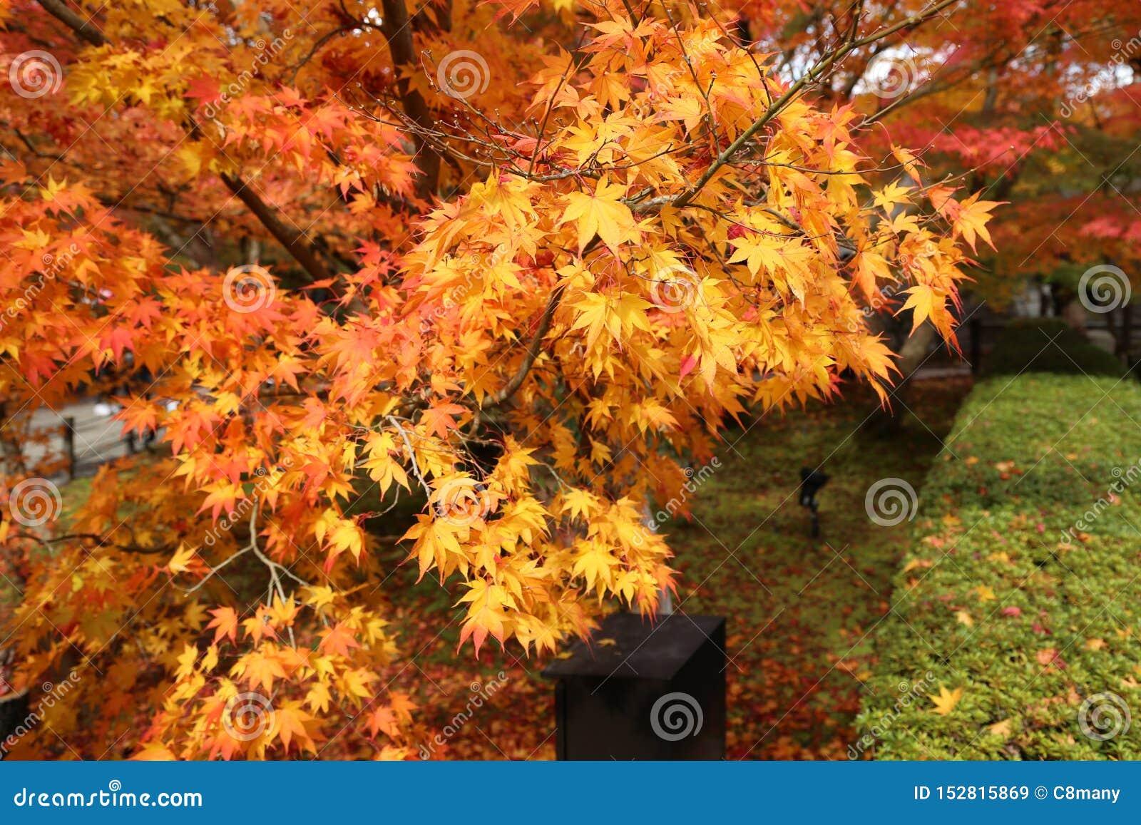 Paysage d automne avec les feuilles rouges et oranges de couleur