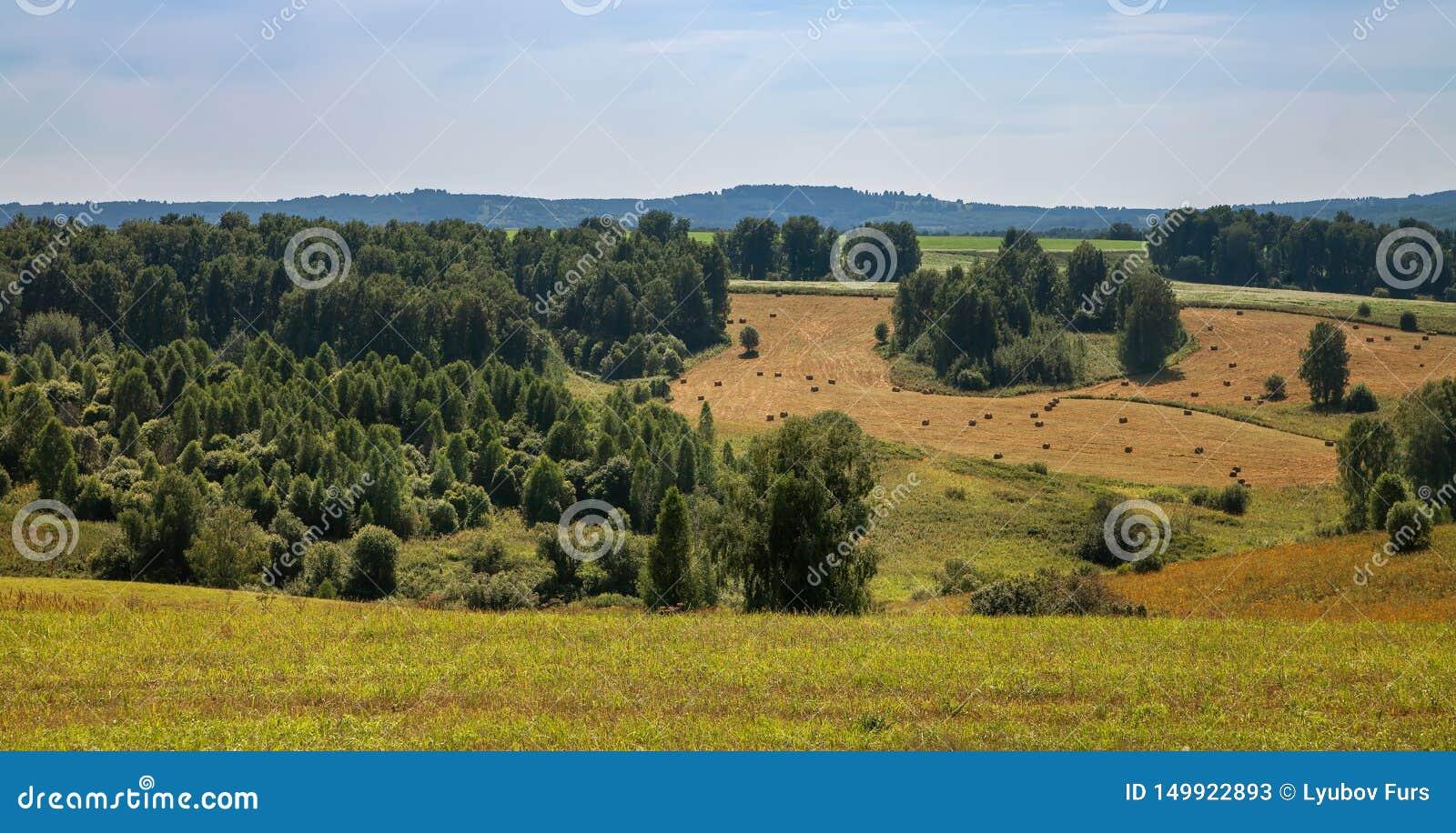 Paysage d automne dans les montagnes de la Russie, des feuilles jaunes, de l herbe et des arbres verts l eau pure de la rivière d