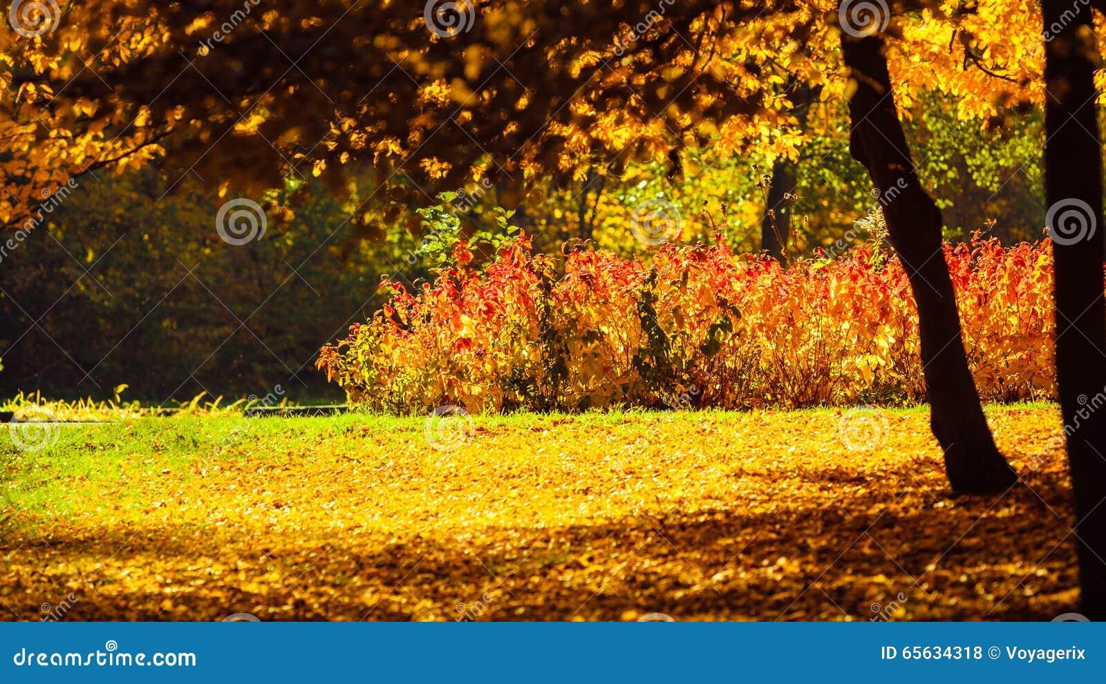 Paysage d automne en parc