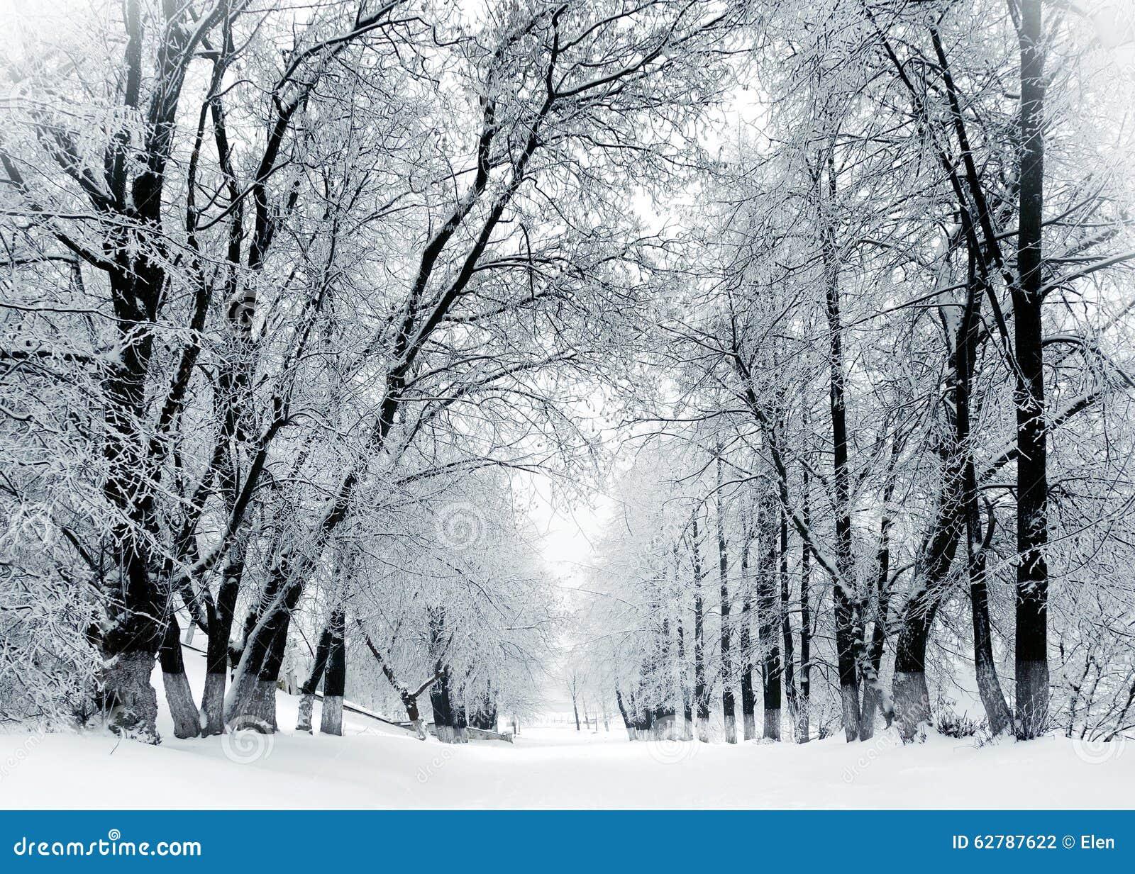 paysage d 39 hiver arbres givr s en parc photo stock image 62787622. Black Bedroom Furniture Sets. Home Design Ideas