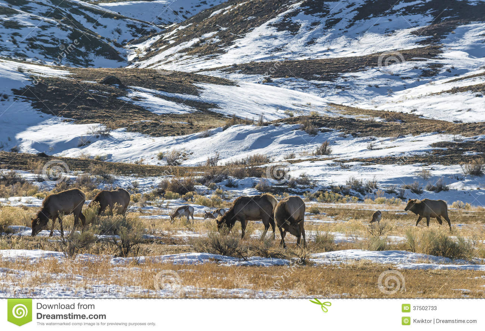 Paysage d hiver de Yellowstone
