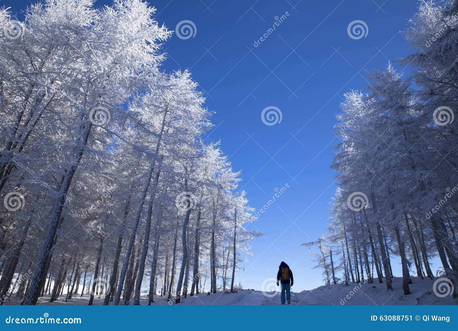 Download Paysage D'hiver, Promenade De Voyageur Dans Les Bois De Neige Image stock - Image du hoarfrost, congelé: 63088751