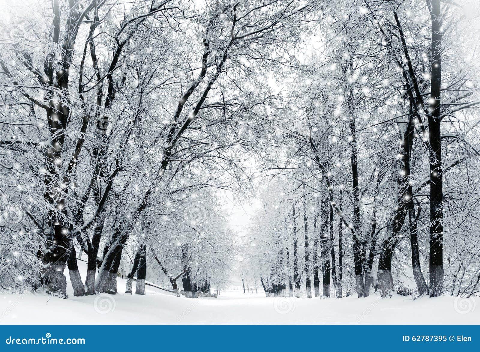 paysage d 39 hiver temp te de neige en parc photo stock image 62787395. Black Bedroom Furniture Sets. Home Design Ideas