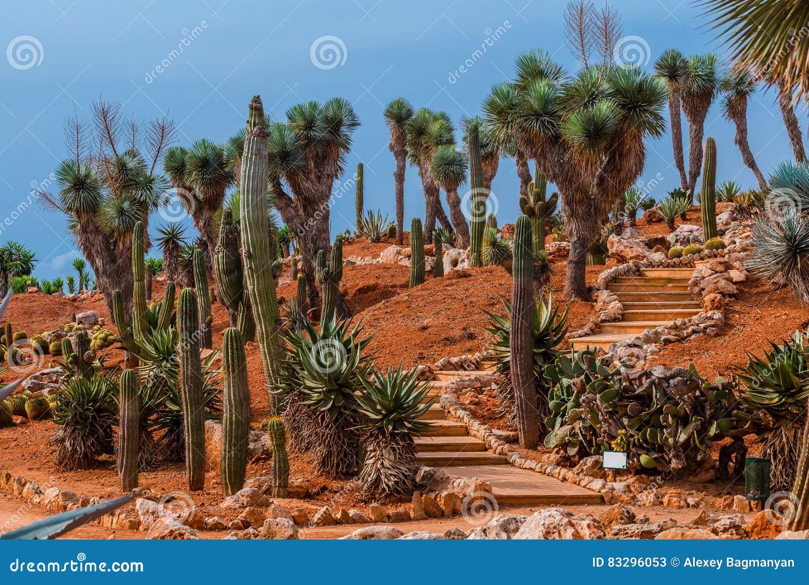Paysage de cactus cactus mexique gisement de cactus jardin de cactoo photo stock image 83296053 for Paysage de jardin