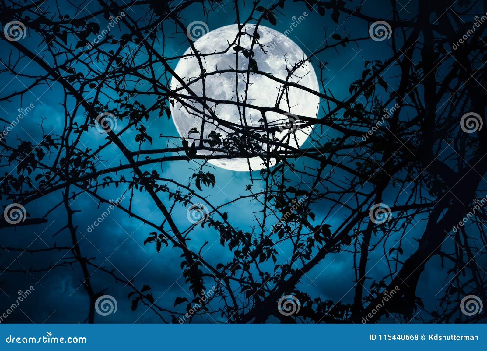 Paysage de ciel avec la lune superbe derrière la silhouette du branc d arbre