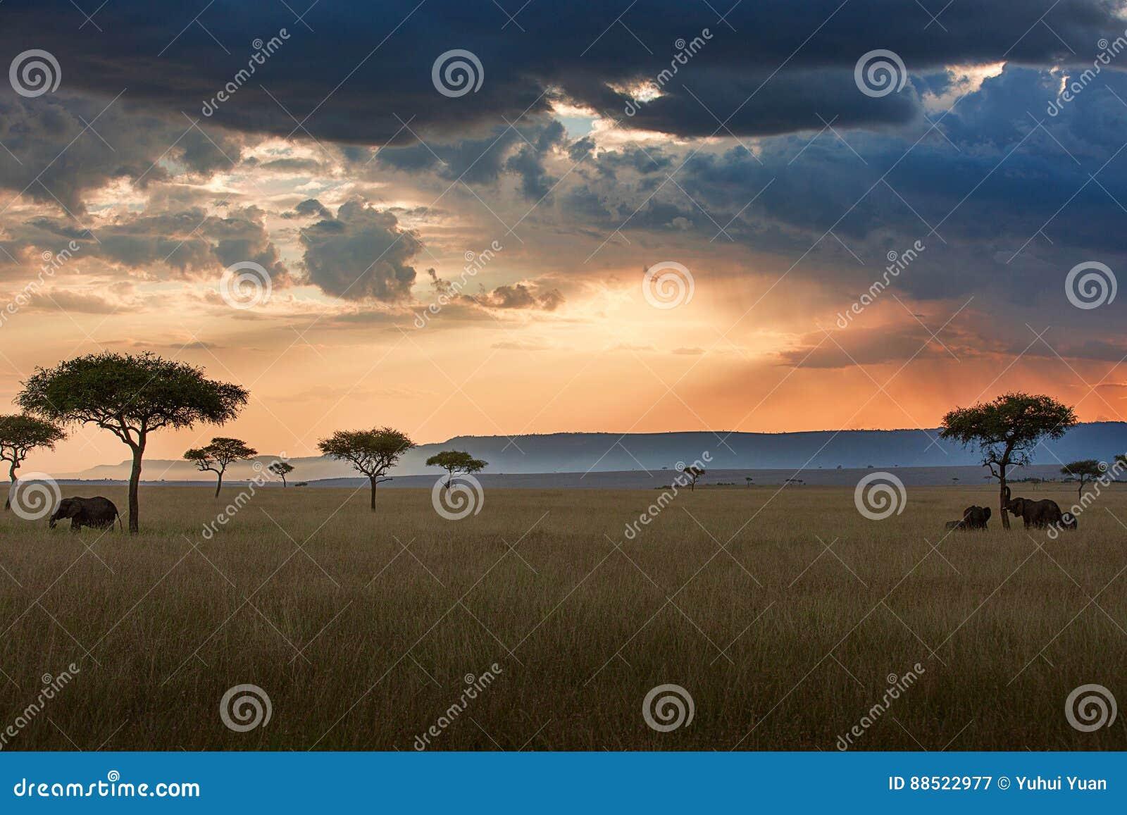 Paysage de coucher du soleil de Maasai Mara