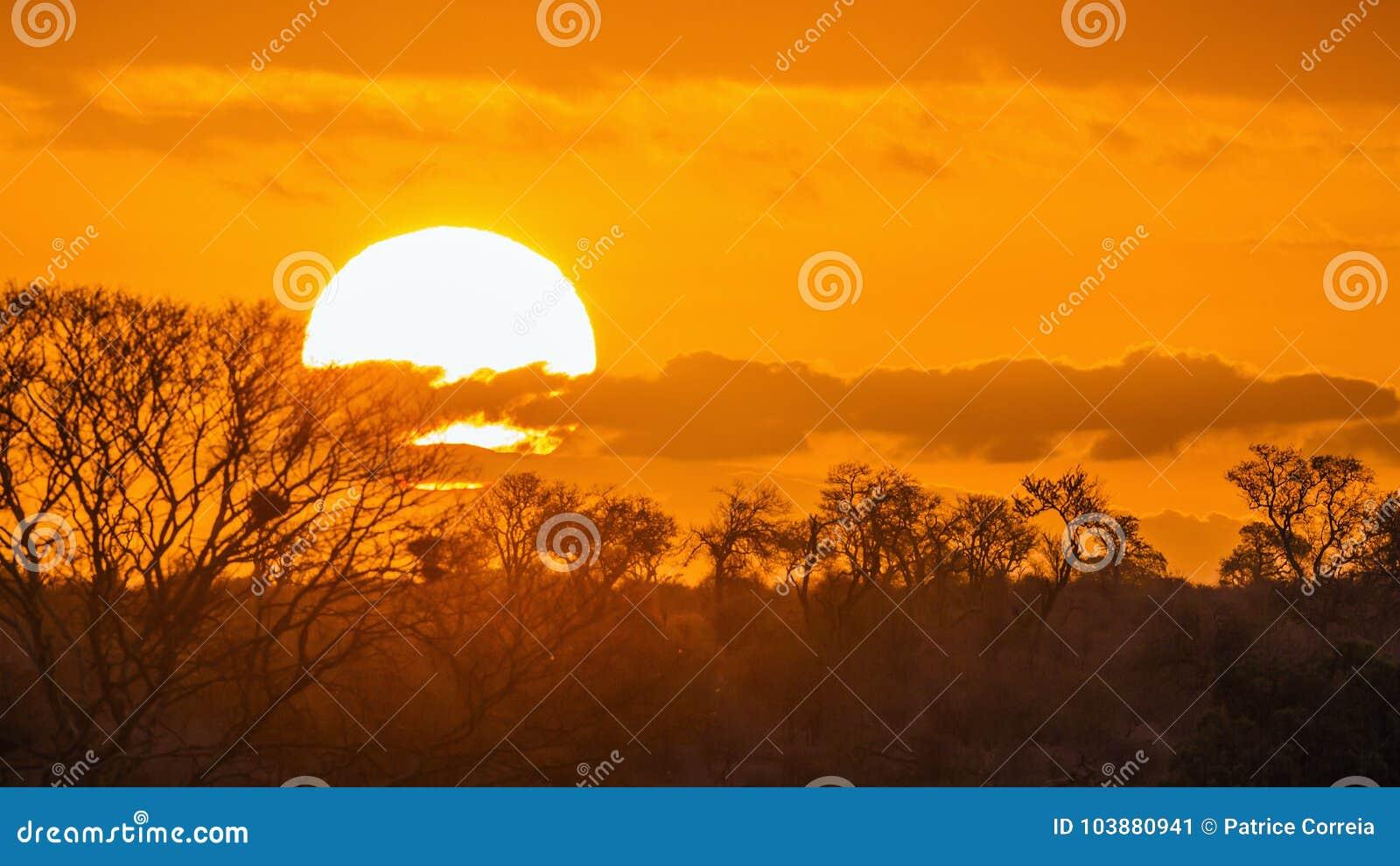Paysage de coucher du soleil en parc national de Kruger, Afrique du Sud