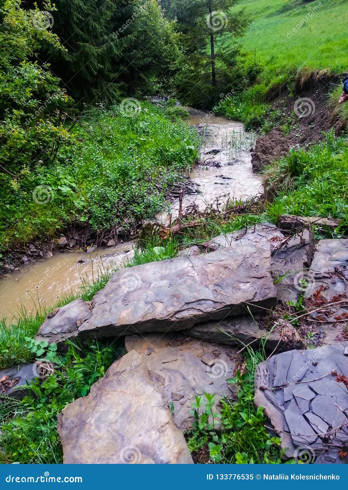 Paysage de crique d été d une rivière de montagne