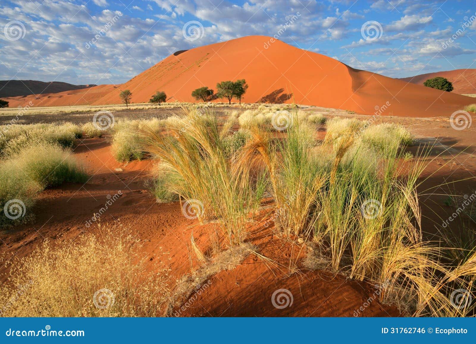Paysage de désert, Namibie