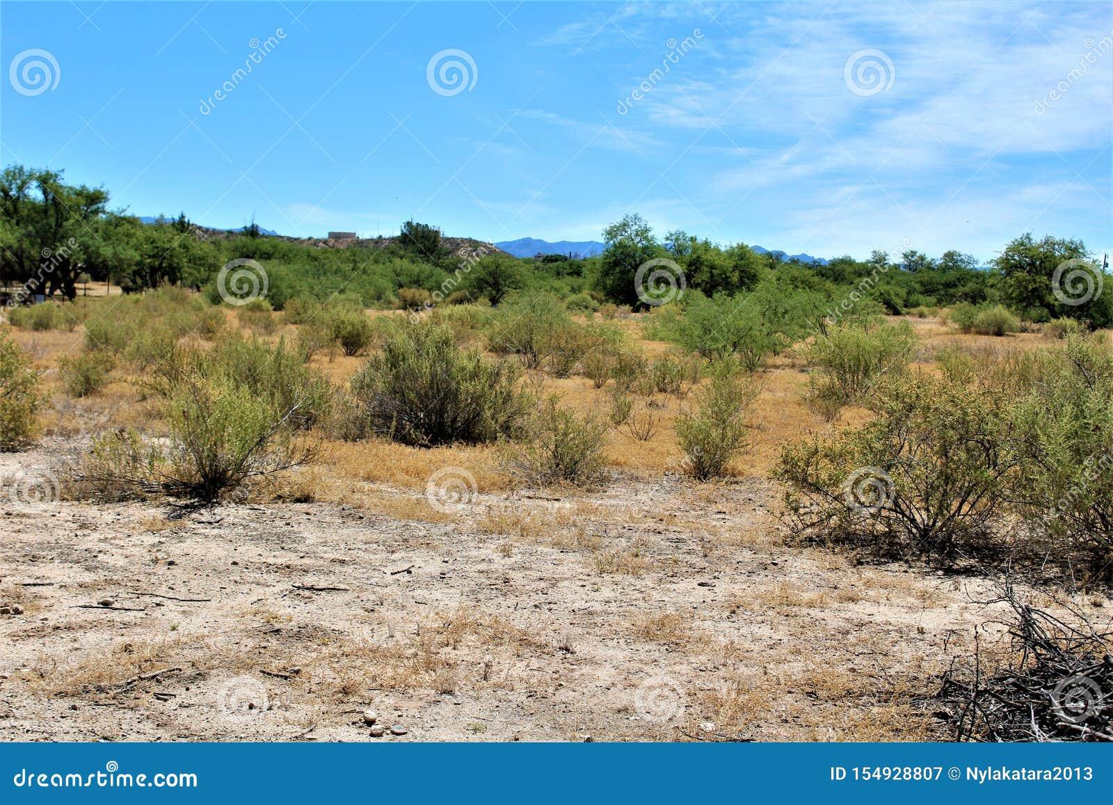 Paysage de paysage de désert situé dans le comté de Cochise, St David, Arizona