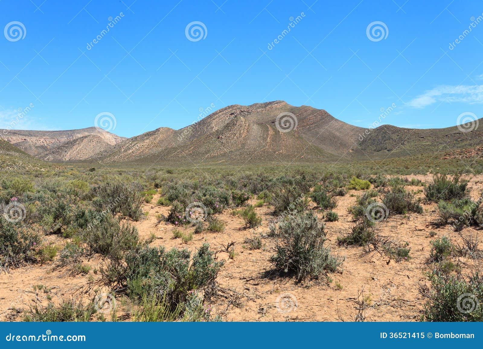 Paysage de forêt de la savane et ciel bleu