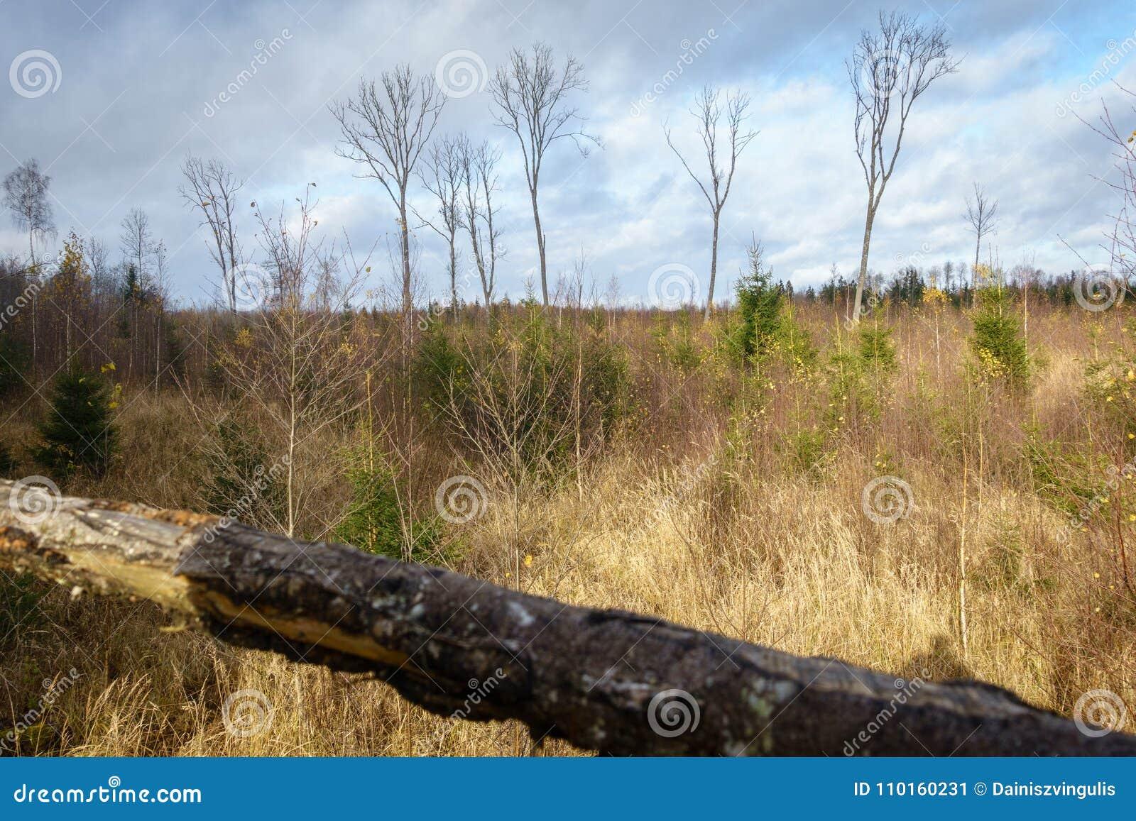 Paysage de forêt pendant l automne de la tour de visionnement du ` s de chasseur