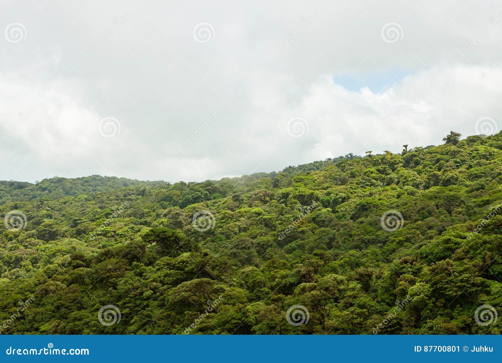 Paysage de forêt tropicale en Monteverde Costa Rica