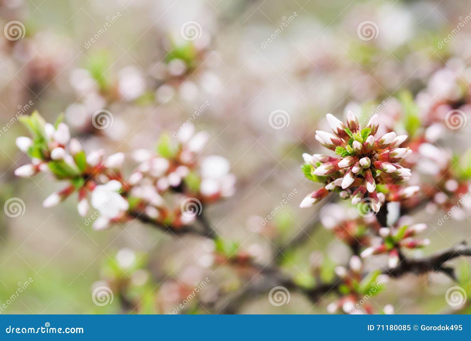 Paysage de jardin de printemps avec l 39 arbuste chinois de for Piani di progettazione domestica con foto