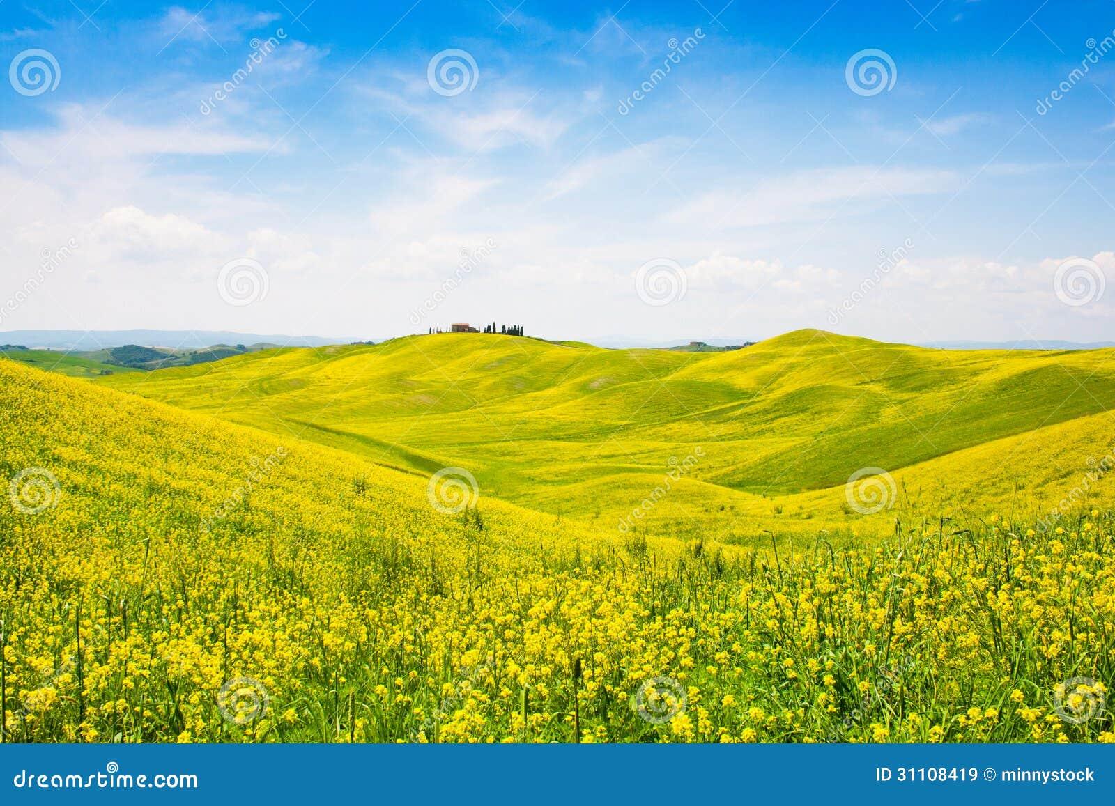 Paysage de la Toscane avec le champ des fleurs en Val d Orcia, Italie